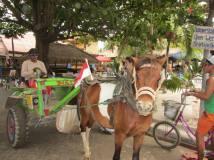 Carretto con cavallo, mezzo di trasporto a Gili Trawangan, in Indonesia